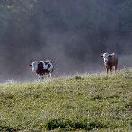 Pastviny v okolí Hlavňova